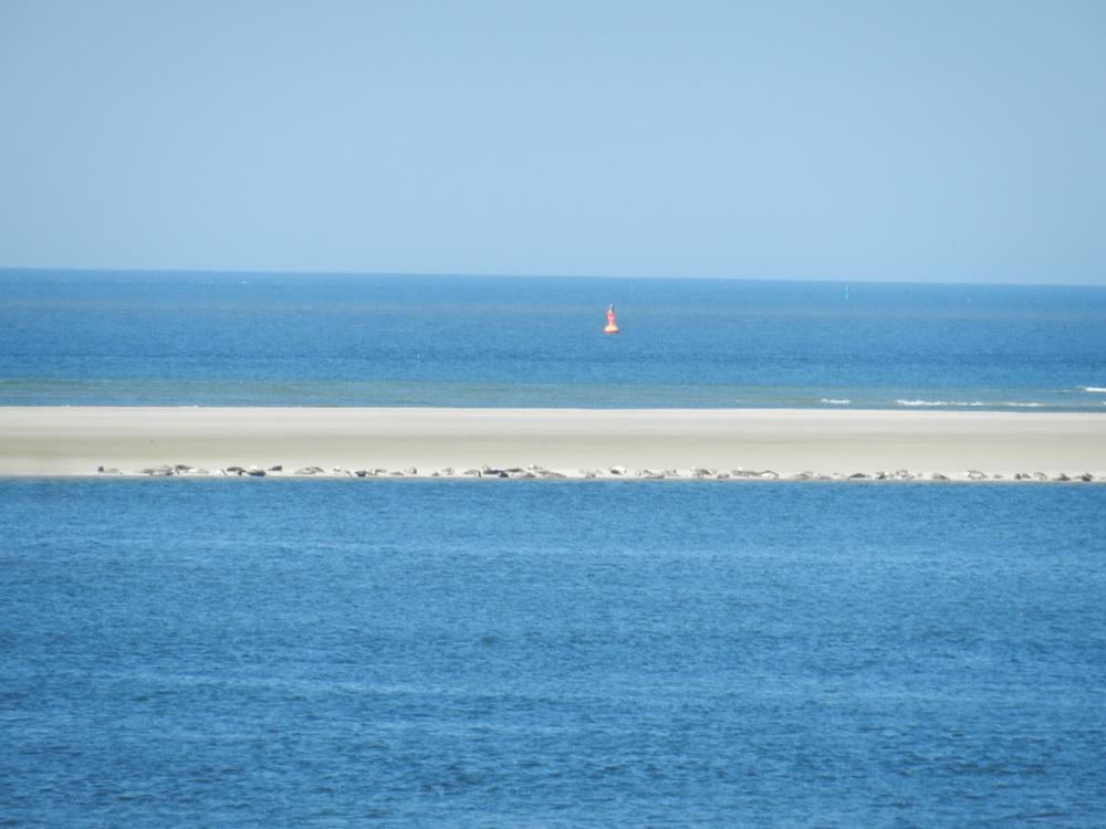 Borkumer Seehundsbank bei strahlendem Sonnenschein