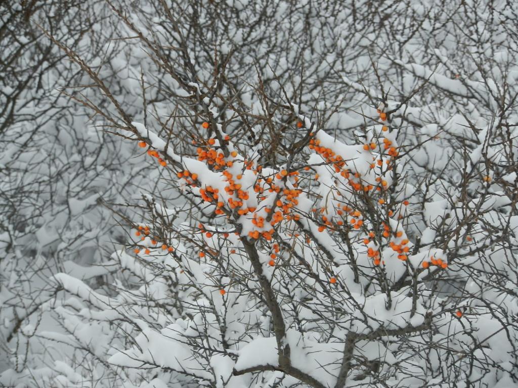 Heiter & Kommodig – Der Januar auf Borkum