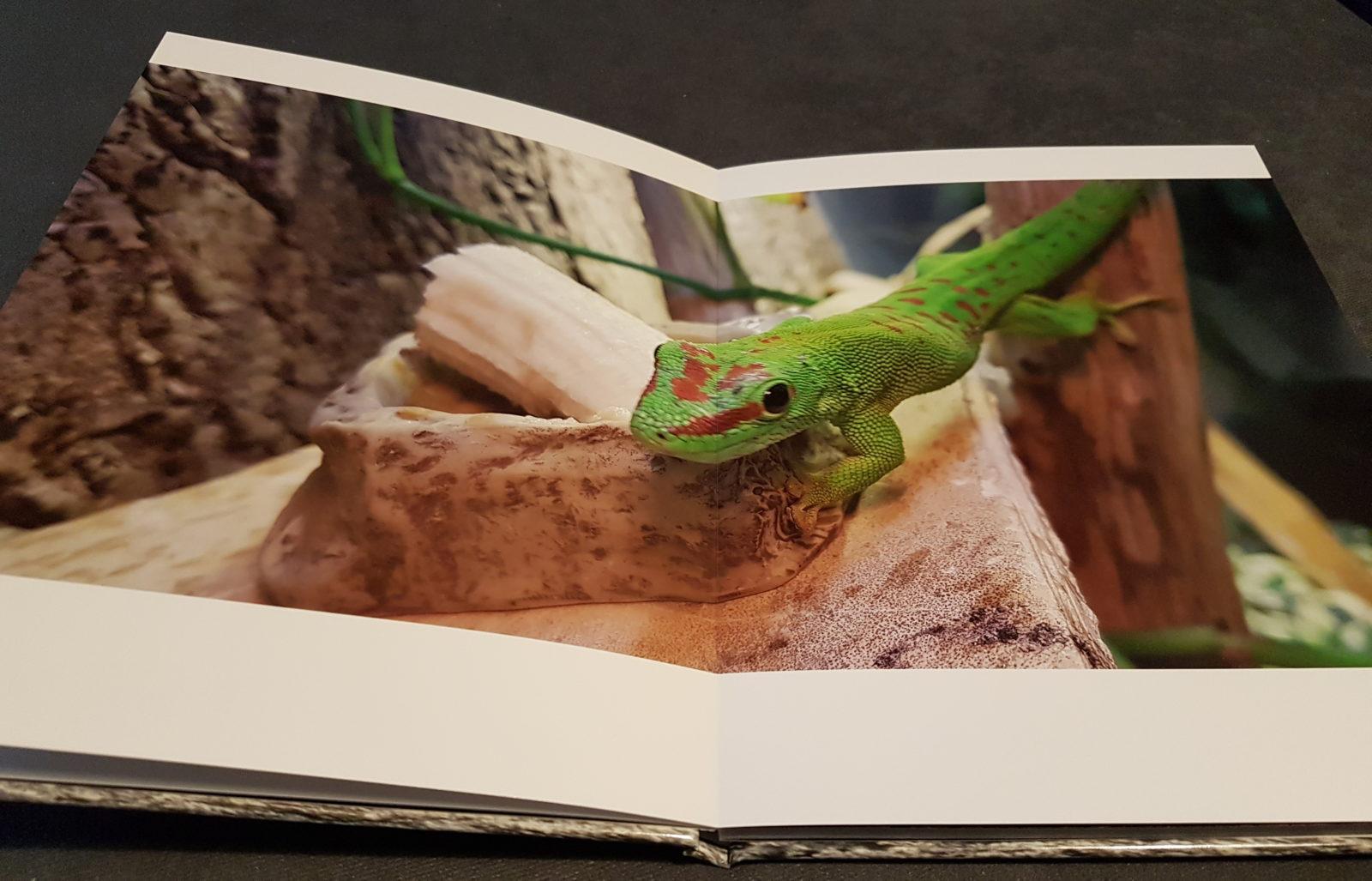 Fotobuch Saal Digital