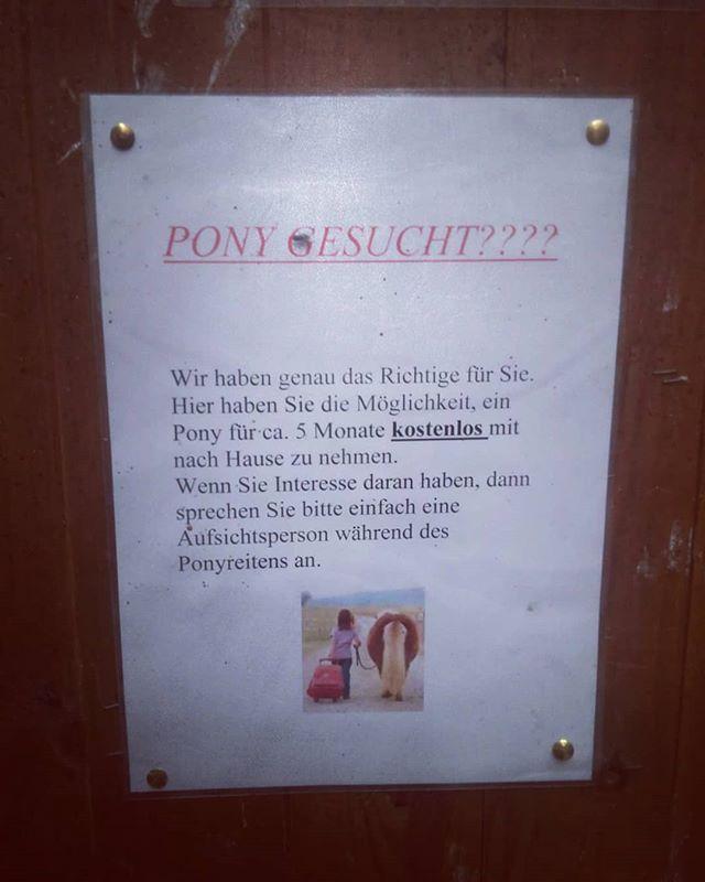 Möchte jemand Ronny das Pony adoptieren?