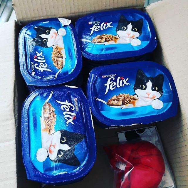 WerbungVon @brandsyoulove.de kam ein Paket voll mit Leckereien für die Patenkatze.Bin ja Mal gespannt ob der verwöhnte alte Herr damit zufriedenzustellen ist. #bylmeetsfelix#werbung #catcontent